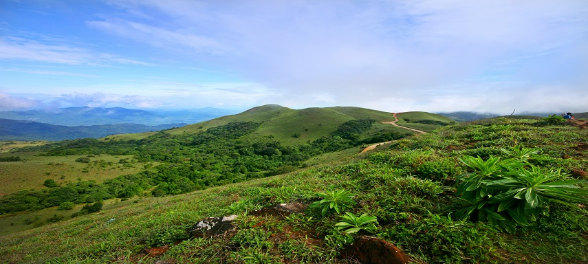 Coorg Valley – TOFTigers