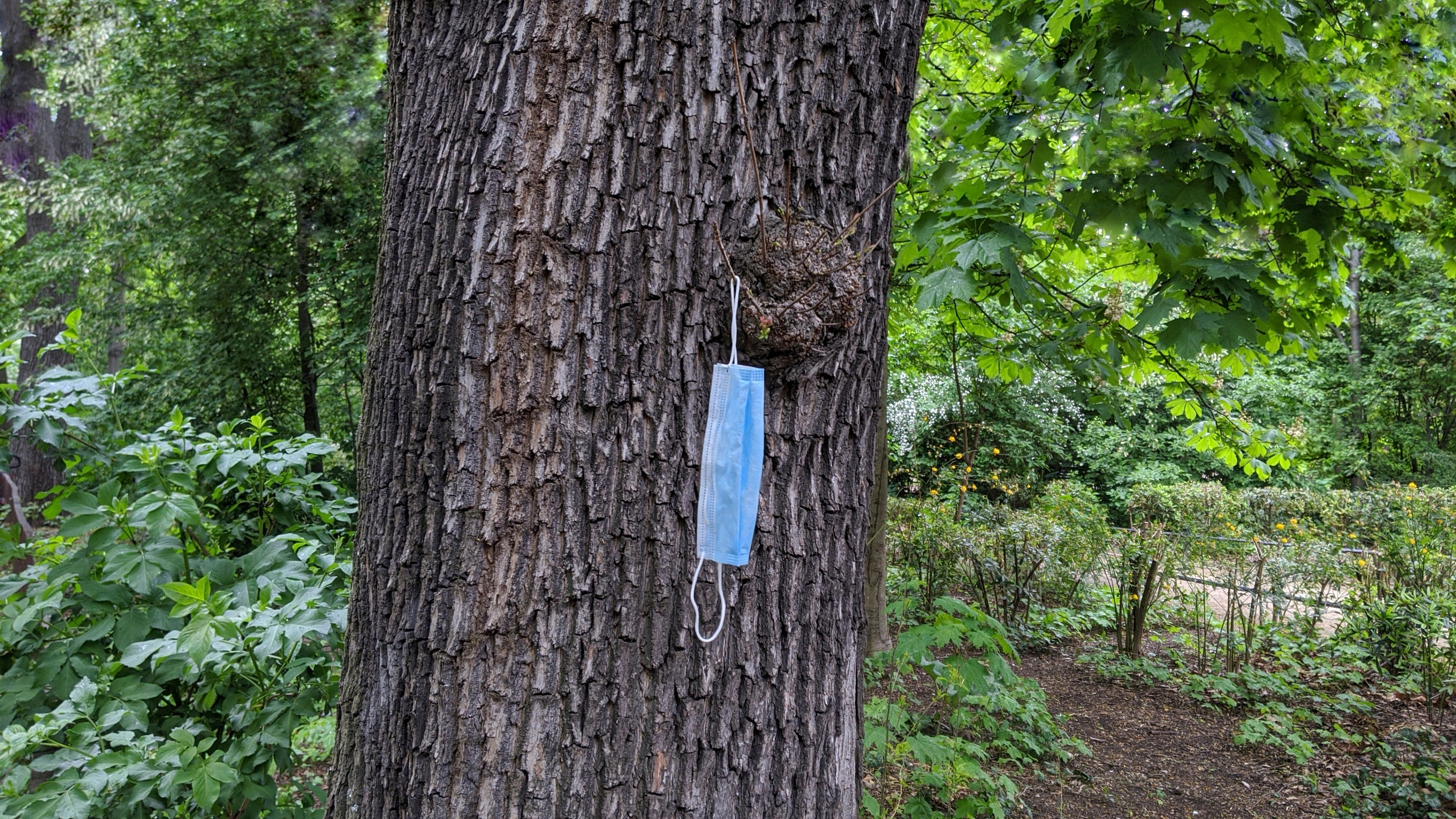 Face mask left hung on tree